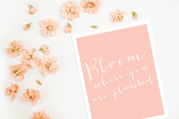 Bloom Where You Are Planted + Free Spring Print