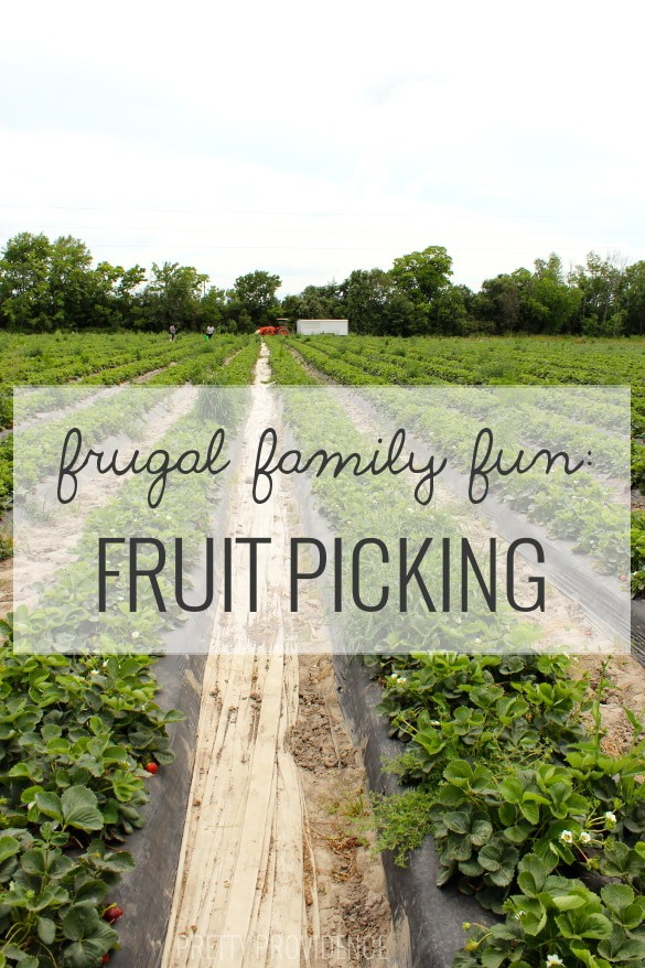 did you know pick your own fruit farms are usually free to visit and you just pay for what you pick!? perfect cheap, fun activity!
