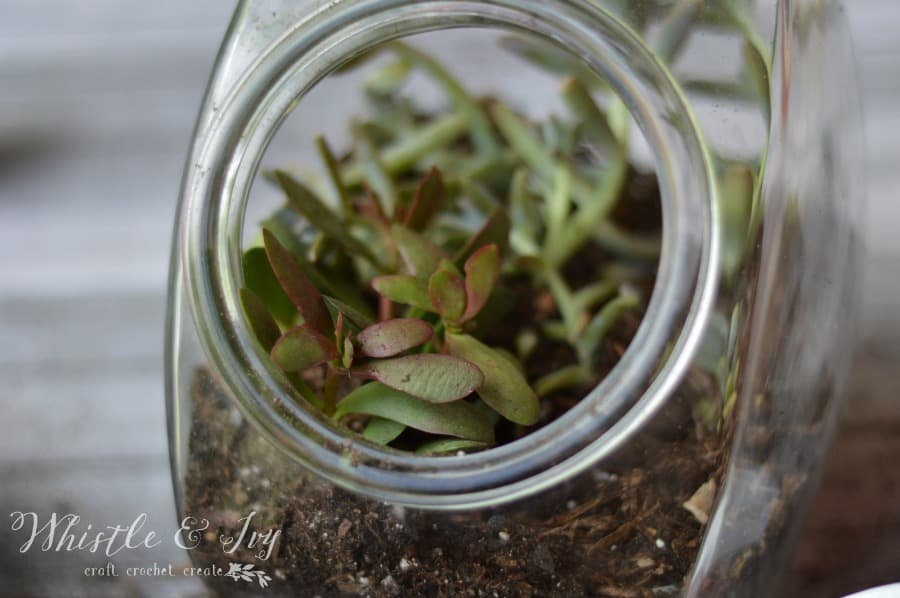 Candy Jar DIY Terrarium - Turn a candy jar thrift store find into this adorable and easy terrarium