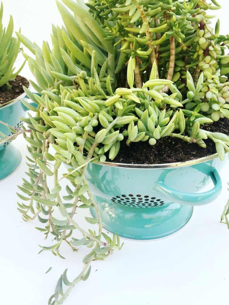 Easy DIY Colander Planters!