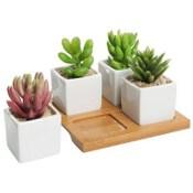 Mini Succulent Planters!!