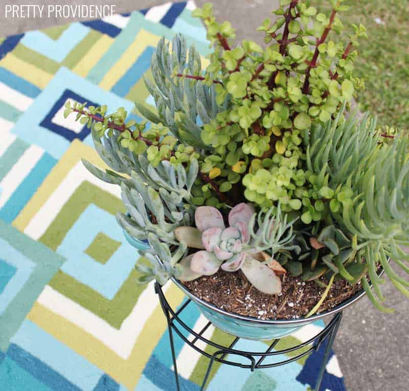 patio-makeover-succulent