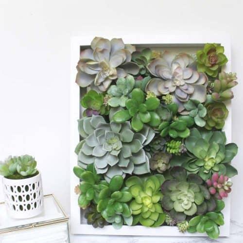 Shadow Box Succulent Decor