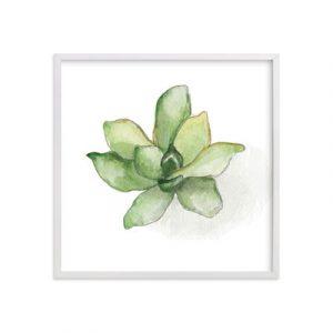 Aeonium Succulent Print from Minted