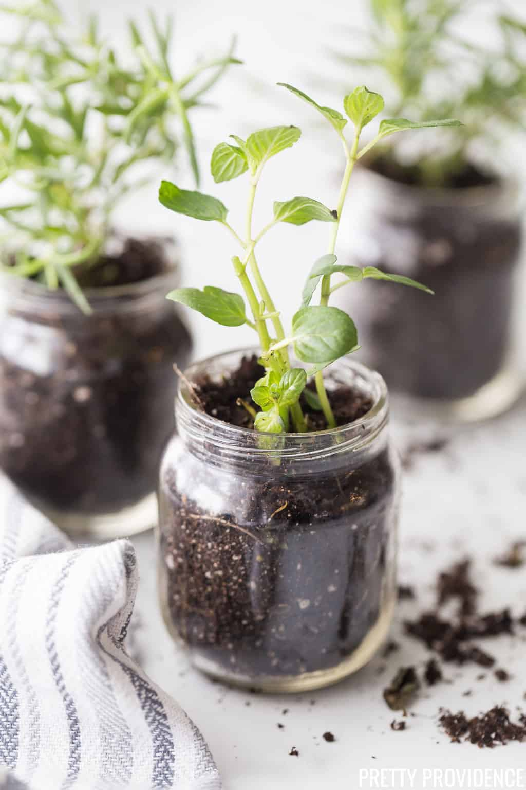 Rosemary and Mint herbs in baby food jars
