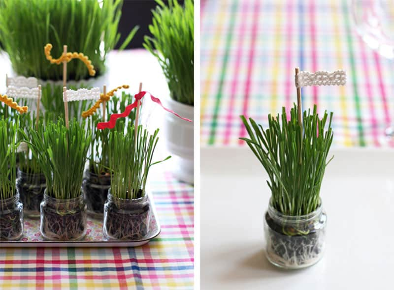 Wheat grass planted in baby food jars from seejaneblog.com
