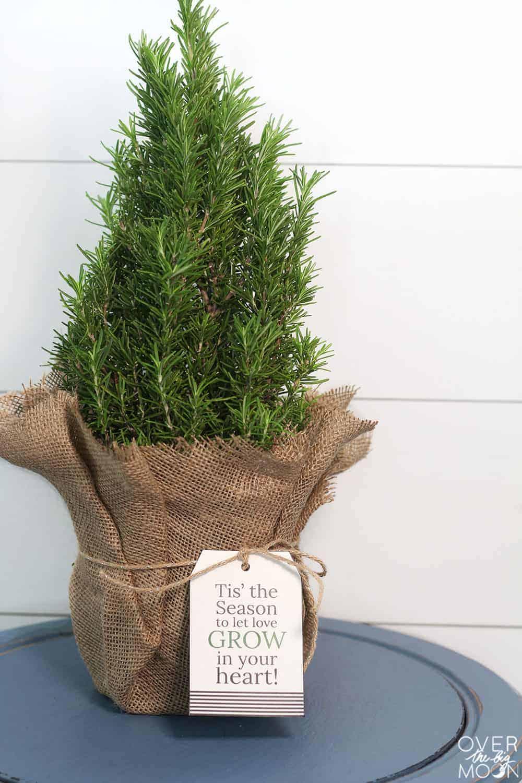 Mini Christmas Tree with Holiday gift tag 'tis the season'