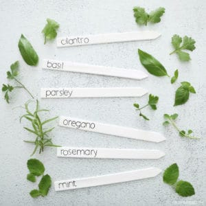 white painted herb markers on concrete with herb leaves around them