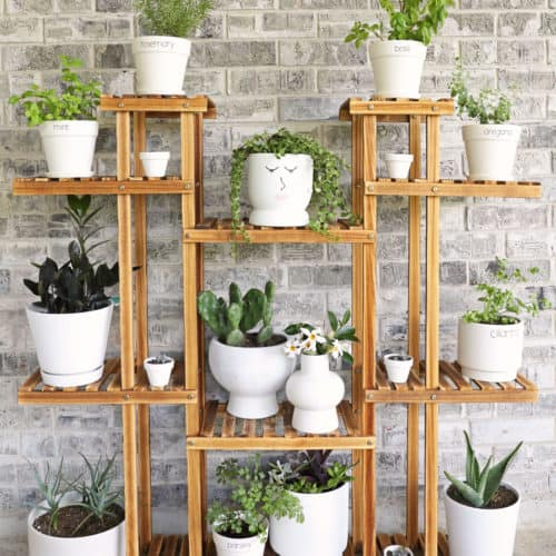 Vertical herb garden on plant shelf in white pots