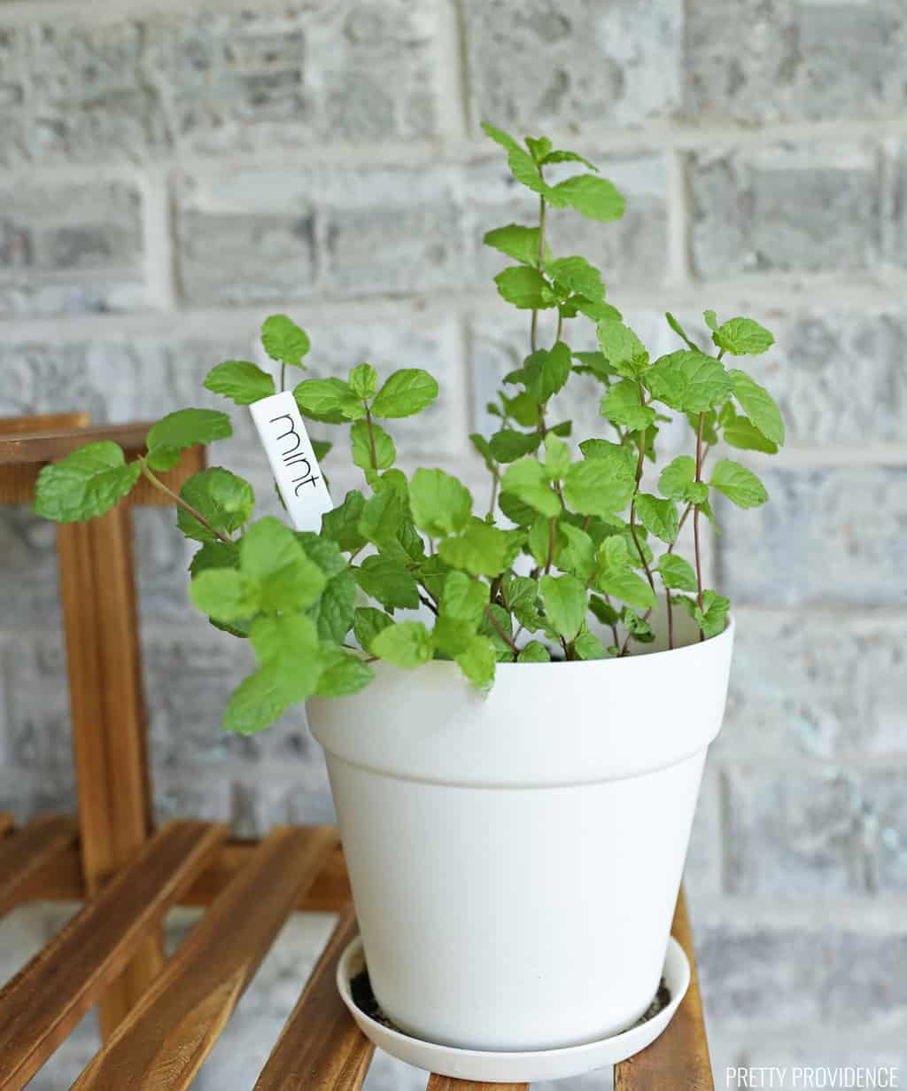 Mint in white pot with DIY plant marker