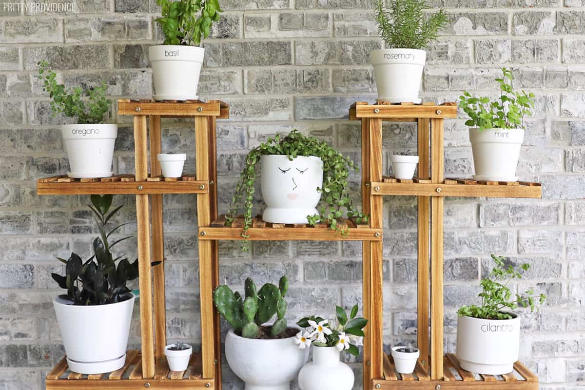 Vertical herb garden, white pots on plant shelf with herbs and succulents in them